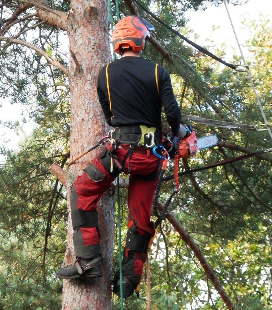 Unibatibois vous propose ses services d'élagage et d'abattage. Travaux forestiers en Essonne 91